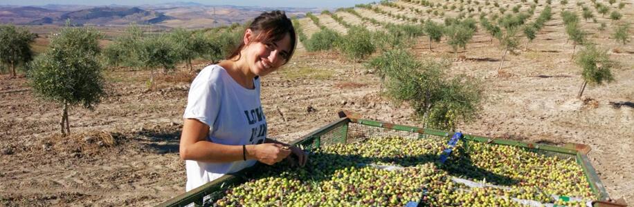 equipo aove ecologico aceite oliva virgen extra laespabila
